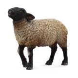 Овца Суффолк (M)